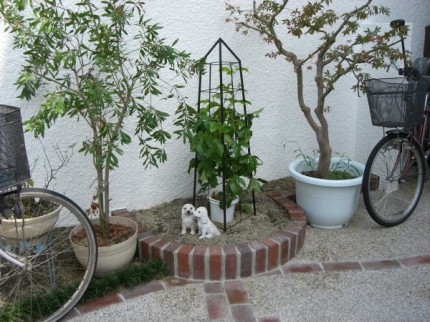 レンガで花壇を作成