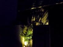 ハイノキをライトアップ