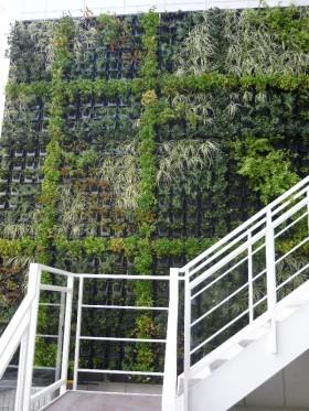 壁面緑化後