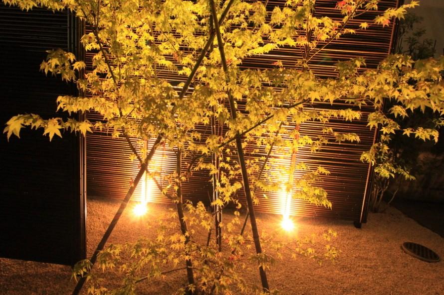 みす垣とヤマモミジをライティング