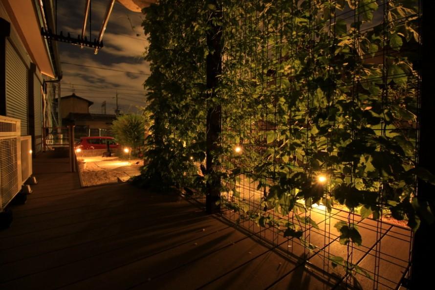 緑のカーテンのライト