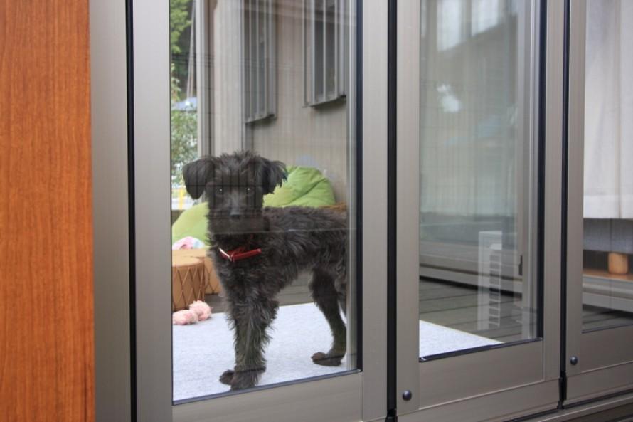 犬と暮らす部屋