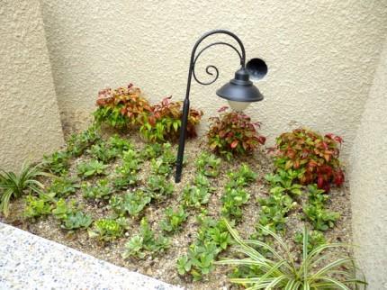可愛い植栽たち