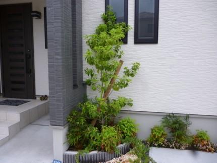 ソヨゴと潅木