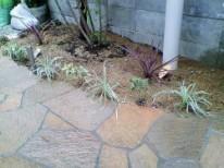 石沿いの植栽