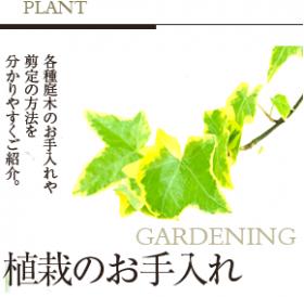 植栽の手入れや剪定の方法を分かり易く紹介。